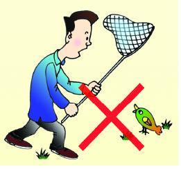 禽流感防控小常识 食品安全漫画与挂图 食品专题图片